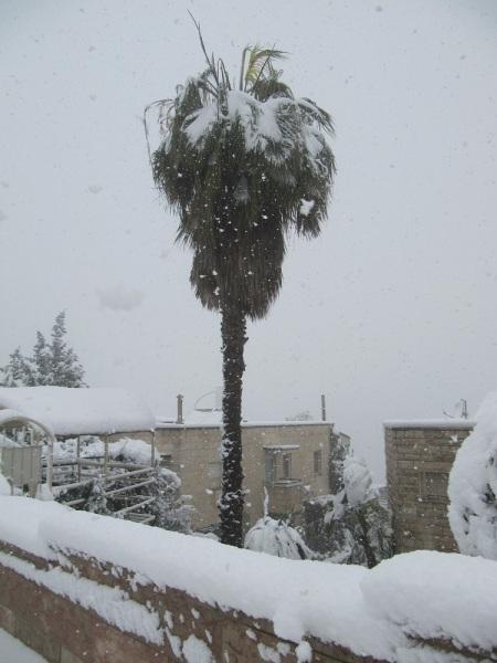 SnowPalmTree