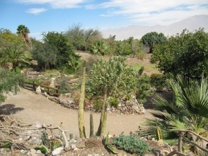 Eilat: Botanical Gardens