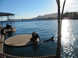Eilat: Dolphin Reef