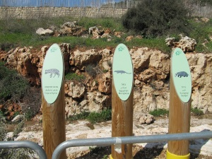 Jerusalem Park: Hopefully not full of Hyenas!