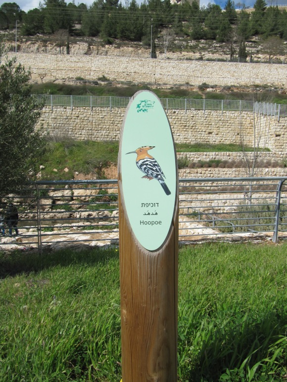 Jerusalem Park: my favourite bird