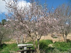 Jerusalem Park Blossom2-30%