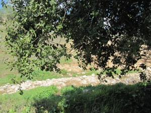 Jerusalem Park: Canal