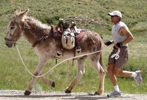 hal_burro