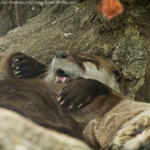 Happy Otter